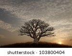 Silhouette Of A Lone Barren...