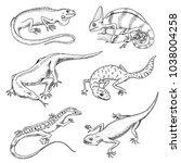 chameleon lizard  green iguana  ... | Shutterstock .eps vector #1038004258