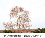bombax ceiba flowering red ... | Shutterstock . vector #1038042448