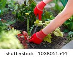 photo of gloved woman hands... | Shutterstock . vector #1038051544