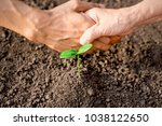 seedlings are growing from... | Shutterstock . vector #1038122650