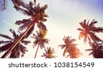 coconut palm trees silhouettes... | Shutterstock . vector #1038154549