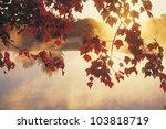Sunrise Through Autumn Leaves ...