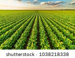 green ripening soybean field ... | Shutterstock . vector #1038218338
