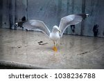 the seagull spread its wings... | Shutterstock . vector #1038236788