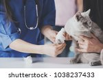 Stock photo veterinarian have a medical examination a cat with sore leg 1038237433