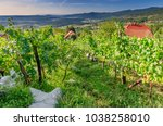 vineyards nearby crnomelj in... | Shutterstock . vector #1038258010