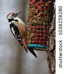 middle spotted woodpecker ... | Shutterstock . vector #1038258280