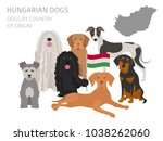 dogs by country of origin.... | Shutterstock .eps vector #1038262060