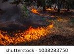 fire. wildfire  burning pine... | Shutterstock . vector #1038283750
