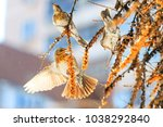 beautiful birds on a sunny... | Shutterstock . vector #1038292840