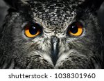 Owl Eyes Close Up. Bird Of Pre...