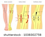 vector illustration diagram.... | Shutterstock .eps vector #1038302758