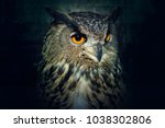 owl close up at night. bird of... | Shutterstock . vector #1038302806