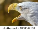 bald eagle with open beak | Shutterstock . vector #1038342130