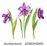 beautiful purple orchid ... | Shutterstock . vector #1038343000