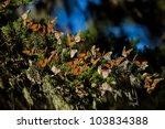 monarch butterfly  danaus... | Shutterstock . vector #103834388