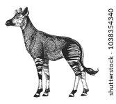 zoo. african fauna. okapi. hand ... | Shutterstock .eps vector #1038354340