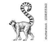 Zoo. African Fauna. Lemur ...