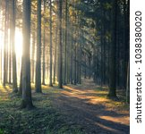 forest road in the morning with ... | Shutterstock . vector #1038380020