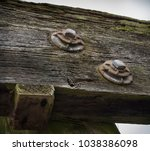 Two Rusty Old Bolts On Mossy...
