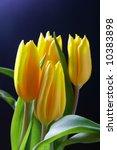 Bunch Of Yellow Tulips Over...