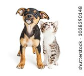Stock photo cute mixed breed puppy and kitten together on white looking up 1038390148