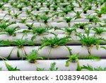 soilless cultivation of... | Shutterstock . vector #1038394084