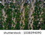 soilless cultivation of... | Shutterstock . vector #1038394090