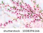 beautiful blooming peach trees... | Shutterstock . vector #1038396166