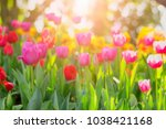 beautiful pink  tulips with... | Shutterstock . vector #1038421168