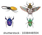 tropical bugs collection.... | Shutterstock . vector #1038448504