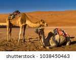 couple of camels resting in... | Shutterstock . vector #1038450463