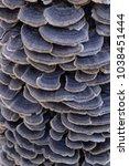 a lot of wood mushrooms. blue...   Shutterstock . vector #1038451444