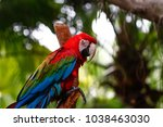 parrots kept in the zoo | Shutterstock . vector #1038463030