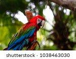 parrots kept in the zoo   Shutterstock . vector #1038463030