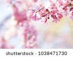 spring cherry blossoms in full... | Shutterstock . vector #1038471730