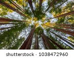 redwoods in muir woods national ... | Shutterstock . vector #1038472960