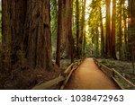trail through redwoods in muir... | Shutterstock . vector #1038472963