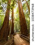 trail through redwoods in muir... | Shutterstock . vector #1038473968