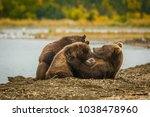 Small photo of Mama-bear milking her two cubs in Brooks falls, Alaska