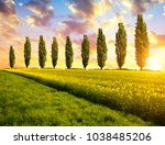Spring Landscape With Field Of...