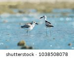 pair of sea bird standing in... | Shutterstock . vector #1038508078