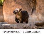 A Baby Tapir At The Zoo