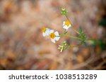 Beautiful Grass Flower Nature...