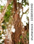 Small photo of Abstract background and texture of adventitious root cover on the big tree in forest
