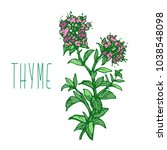 thyme herb with green leaves... | Shutterstock .eps vector #1038548098