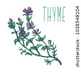 thyme herb with green leaves... | Shutterstock .eps vector #1038548104