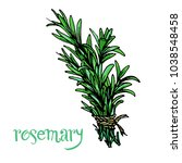 rosemary green herb branches... | Shutterstock .eps vector #1038548458