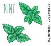 mint leaf  peppermint green... | Shutterstock .eps vector #1038548608